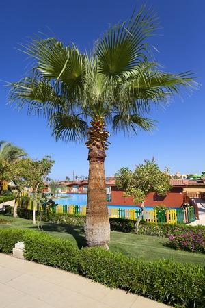 Palm in Hurghada, Egypt