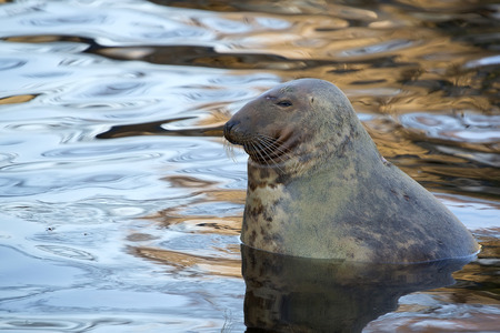 Seal in the wild