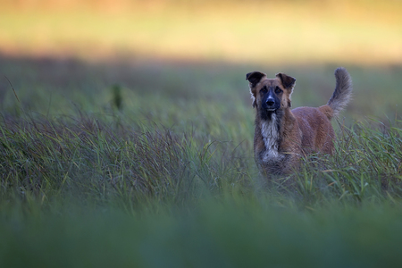 Dog in a clearing