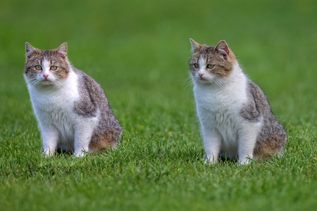Cats in a clearing