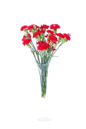 Red carnations in vase