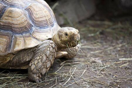 Turtle in the wild, a portrait Stockfoto