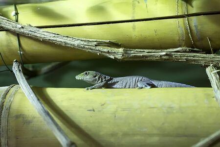 Gecko on a tree
