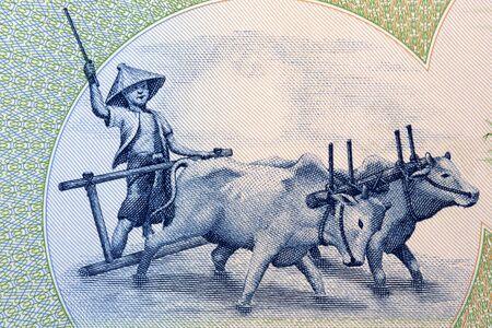 Farmer and bullock cart from Burmese money