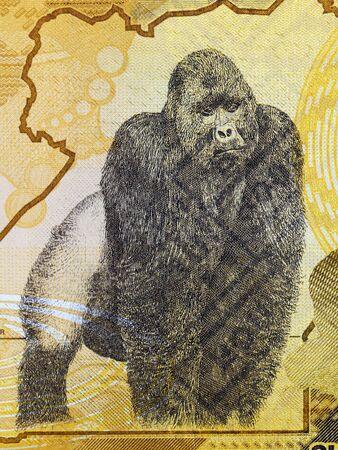 Gorilla a portrait from Ugandan money Stockfoto
