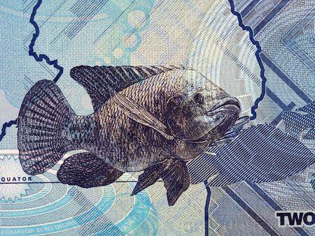 Fish a portrait from Ugandan money