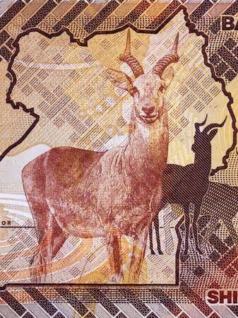 Antelope a portrait from Ugandan money