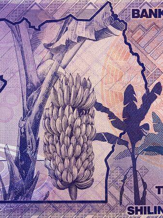 Banana tree from Ugandan money
