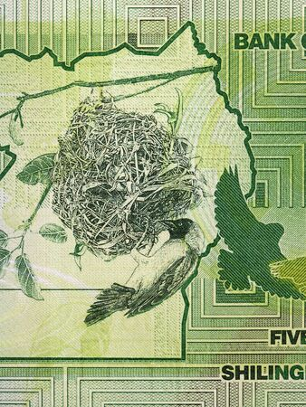 Bird with the nest a portrait from Ugandan money