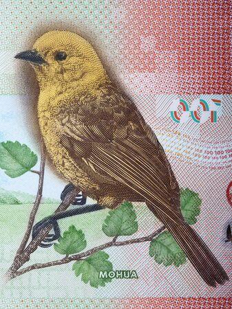 Yellowhead - Mohua a portrait from New Zealand dollar