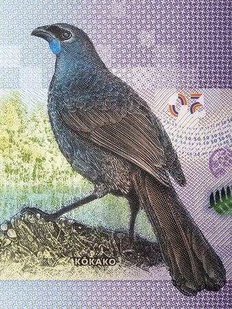 Kokako a portrait from New Zealand dollar