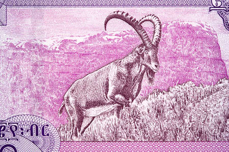 Capricorn from Ethiopian money