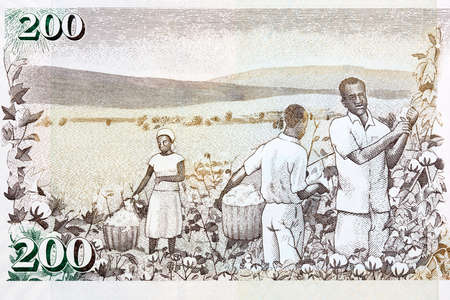 Cotton harvest from old Kenyan money Reklamní fotografie