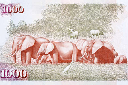 African elephants from old Kenyan money Reklamní fotografie