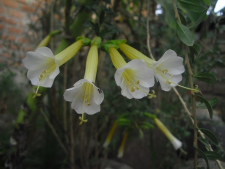 garden and  white flower