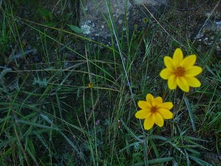 wild flower Stock Photo - 13236601