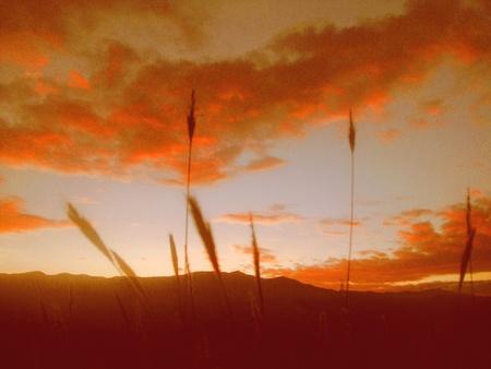 joy of sunset