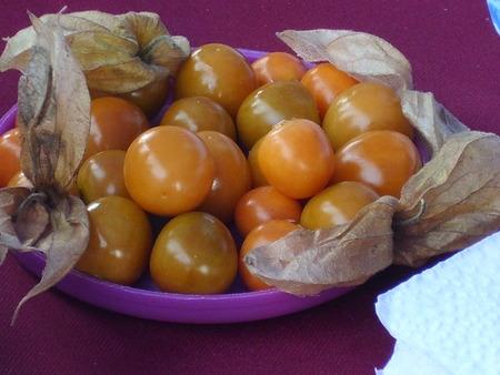 aguaymanto Andean fruit