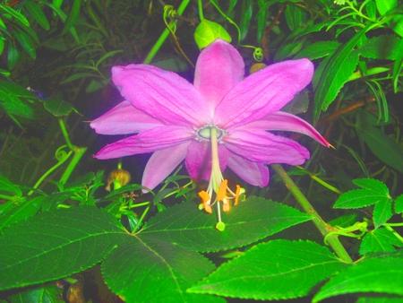 Andean flower