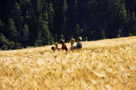 peasantry: harvest time Stock Photo
