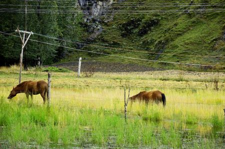 Horse on the grass photo