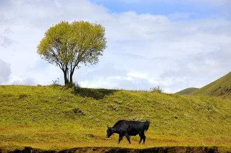 een rundvee en een boom Stockfoto