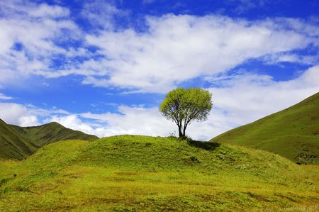 Green landscape with isolated tree Stock Photo - 4566938
