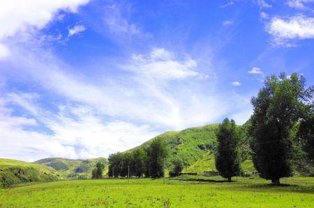 Grassland on the tree Stock Photo - 4582552