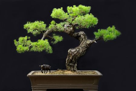 paesaggio in vaso