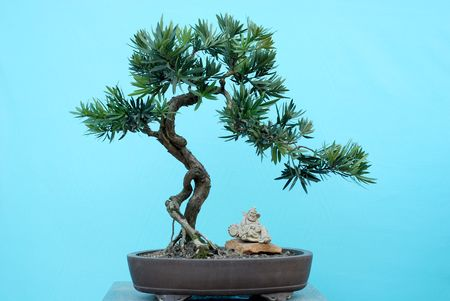 accretion: Bonsai Stock Photo