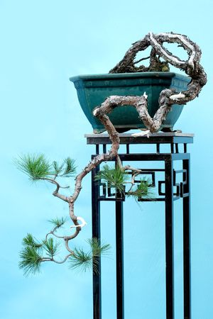 Bonsai photo