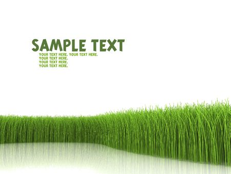 Grass on white background Stock Photo