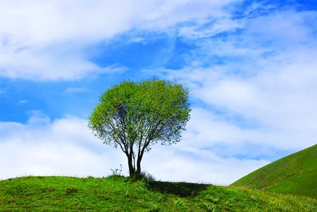 Isolated tree with green landscape photo
