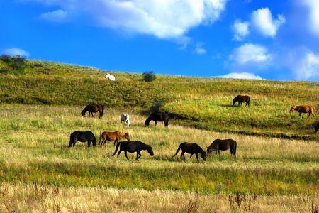 Horses on beautiful landscape photo