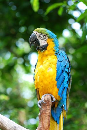 Parrots on the Tree photo