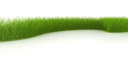 Grass on white background  photo