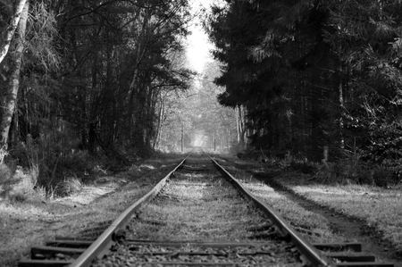 forest railroad: Old railroad going trough a forest in black and white.