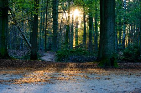 Sun shining trough trees in a park casting beams on the ground at sundown Zdjęcie Seryjne