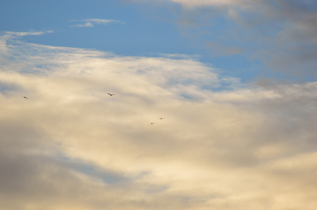 Several birds silhouette flying to the clouds in the background