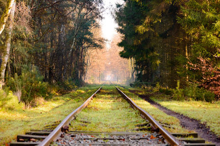 forest railroad: Set of old railroad tracks with moss covered wooden ties extending into the distance in dense hardwood forest with fallen leaves covering surface during autumn