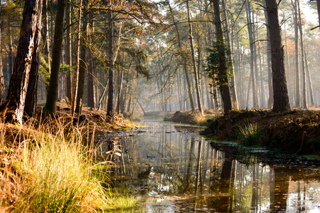 dense forest: Tall old growth trees in dense forest reaching over calm stream as beautiful nature background scene Stock Photo