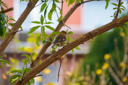feathered: Cute single little gray and brown feathered bird waiting in middle of tree branch outdoors