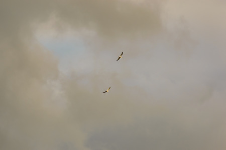 Two birds in the distance flying into gathering grey storm clouds obscuring the blue sky