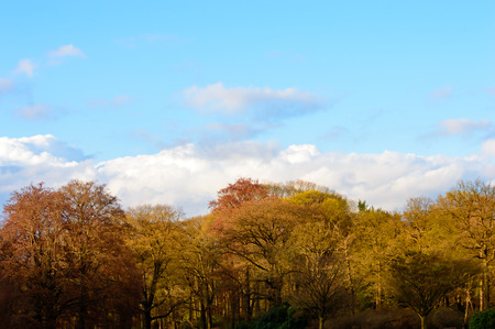 deciduous woodland: Pretty colors of autumn woodland with assorted deciduous trees with their red , yellow and orange leaves against a sunny blue sky with clouds Stock Photo