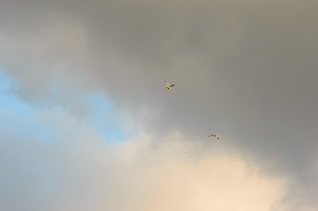 encroaching: Two birds flying in the distance against encroaching grey clouds covering the blue sky and white clouds behind Stock Photo