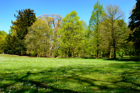 changing seasons: Fresh green spring landscape with woodland trees and a green meadow in a park depicting the changing seasons