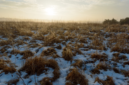 Sunrise over wild grass with water drops from melting snow and low fog in the distance