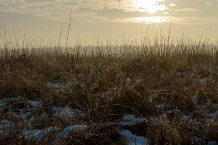 Wild Grass plants with water drops from the snow melted by the sun creating fog in the distance on a cold winter morning