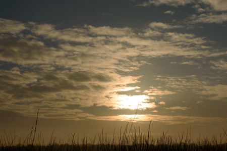 Sun rising and breaking trough the few clouds over a grassy landscape on a morning in winter Zdjęcie Seryjne