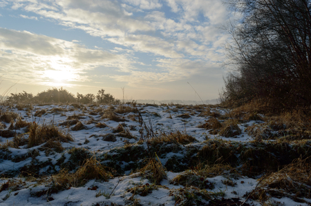 Melting snow on brown grass plants with the sun rising over plants in the back on a cold winter morning Zdjęcie Seryjne